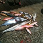 Helen S Cobia, Kings, Yellow Tails, Muttons, Porgys
