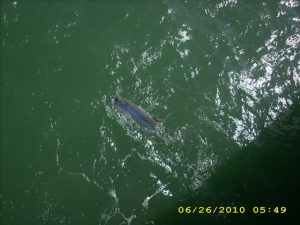 Tarpon also straight down 2