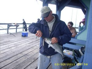 Eric catching Bluefish on Top water lures